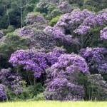 Dia Mundial do Meio Ambiente é celebrado neste domingo