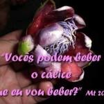 Festa de São Tiago, Maior
